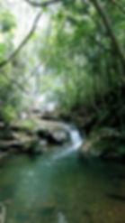 Cachoeira trilha.jpg