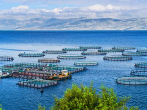 Fish vaccination: a vital tool to ensure sustainable aquaculture
