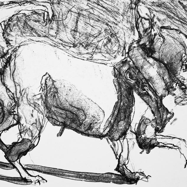Jane Giblin_The Venetian Chihuahua Steps Out, lithograph, 19cm x 23.5cm, 2020