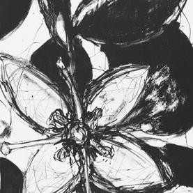 JaneGiblin_ACoastal Correa, lithograph,
