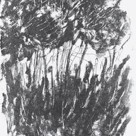 JaneGiblin_Dog Island Trees,lithograph,