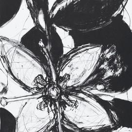 JaneGiblin_Coastal Correa, framed lithograph, 36cm x 26.5cm, 2018