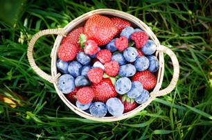 3fruits_Fraisière LeBel