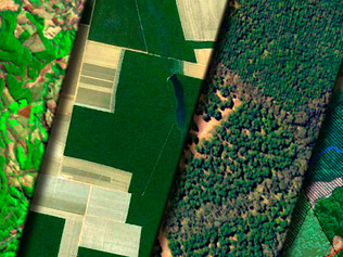Inteligência Territorial: Compreendendo a Agropecuária Brasileira
