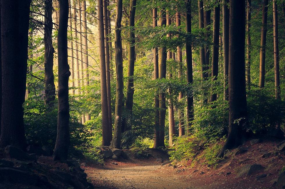woods-945405_1920.jpg