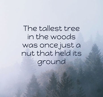 The-tallest-tree-in-the.jpg