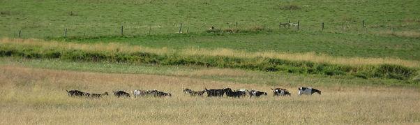 Helm acres nubians, nubian dairy goats, willowcreek oregon,vale oregon