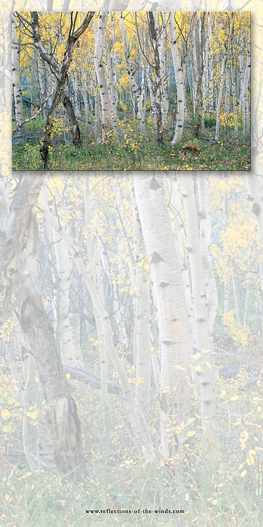 Dry Erase Board, Aspens of the Fall