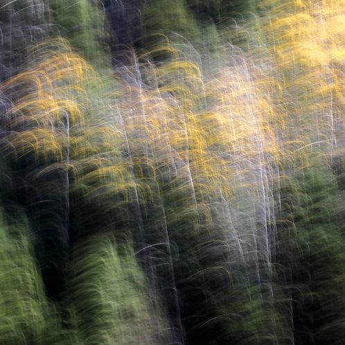 UCE - Tour of Fall, No. 1609-6160, 48x48