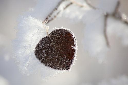 Frosty Morn 1912-8027
