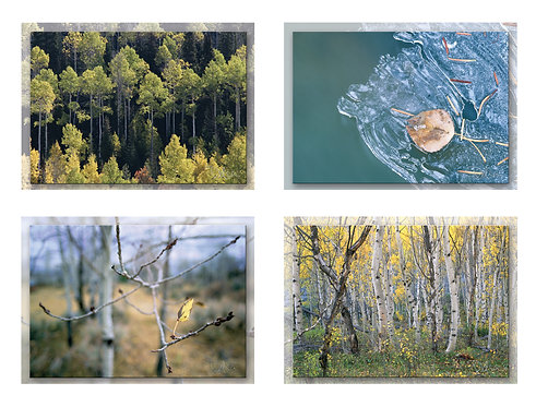 Greeting Card Set (8 cards), Aspens of the Fall