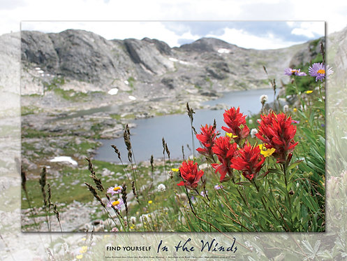 Poster, High Altitude Paintbrush
