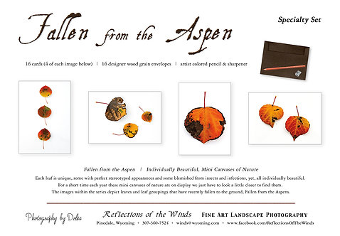 Greeting Card Specialty Set (16 cards), Fallen from the Aspen