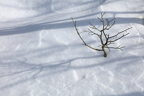 Shadows Beneath the Aspen, 21-0131-044