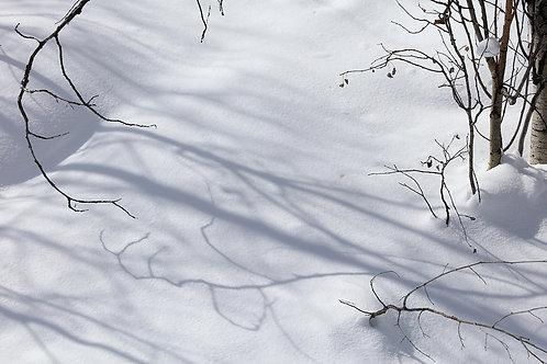 Shadows Beneath the Aspen, 21-0217-539