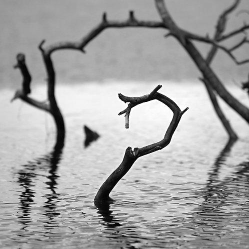 Spirit of the Lake II, choose color or black & white