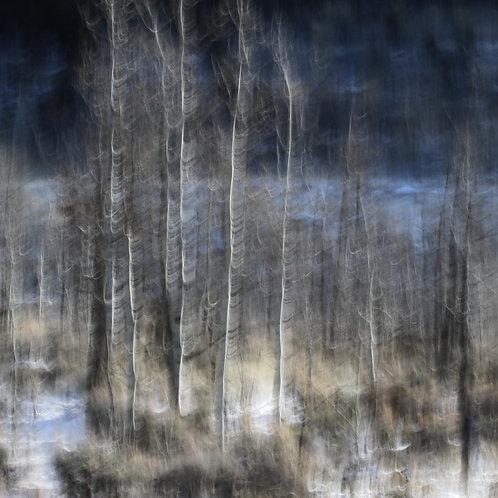 UCE - A Winter's Hillside, No. 1511-0150sq, 48x48