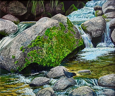 Water Ouzel, gouache watercolor
