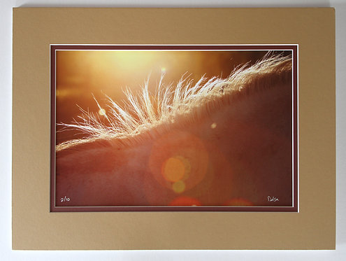 18x12 Backlit in Motion II, matted