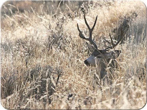 Cutting Board, Deer (Resting)