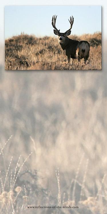 Dry Erase Board, Deer