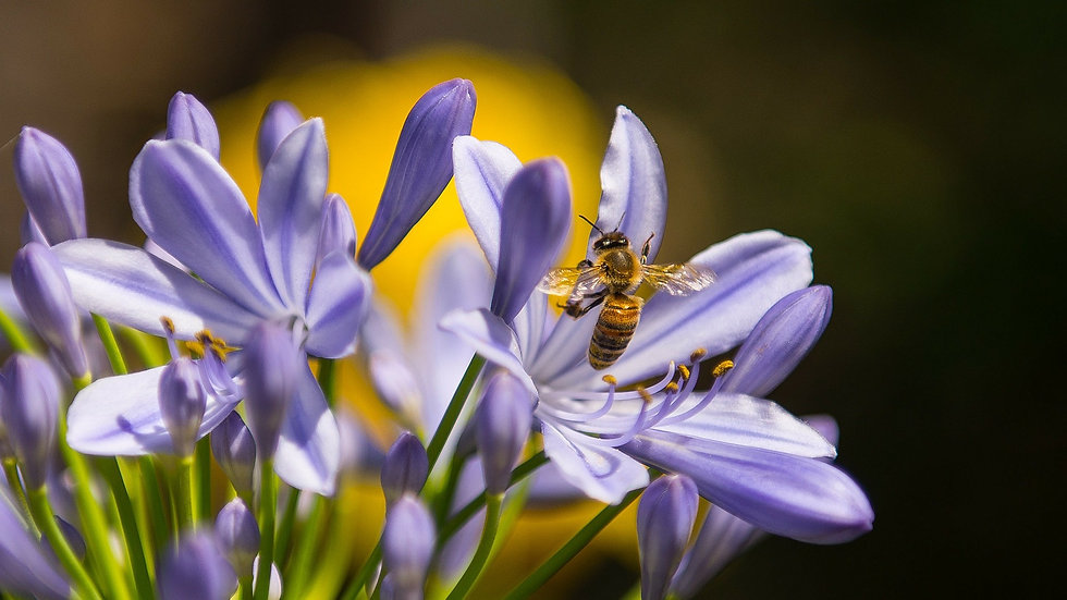 flower and bee by vizyweb from Pixabay c