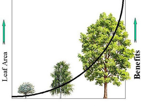 Tree Action Now: Shaping the Future of Ottawa's Urban Forest