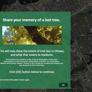 Memories of lost trees