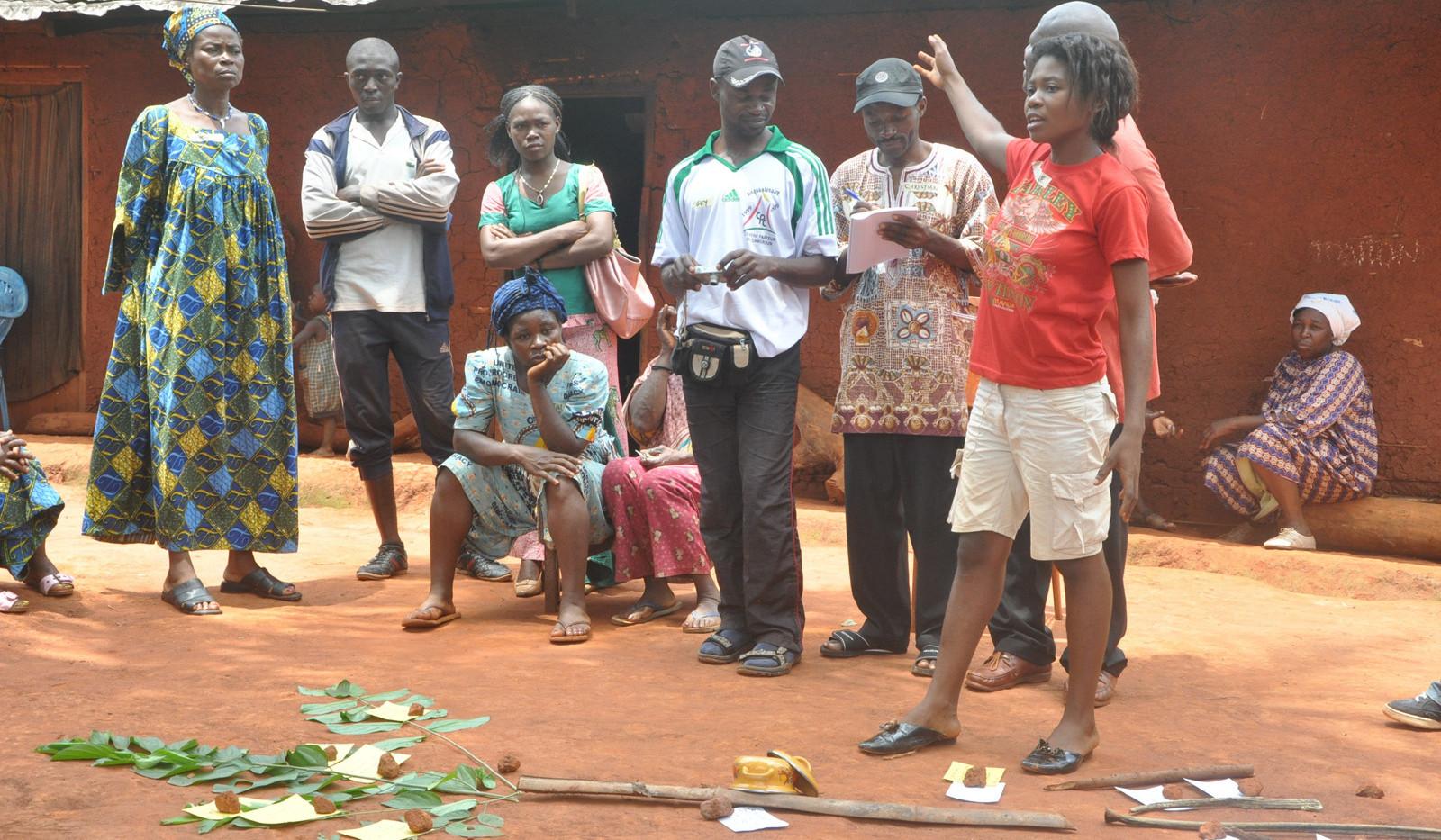 Cameroon-tree.jpg