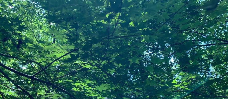 春土用・4/22(木)・23(金)・27(火・満月)- 29(木)関東セッションのお知らせ。