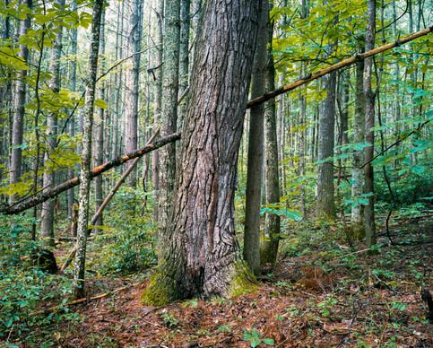 M9C_Landscape_Virginia2.jpg