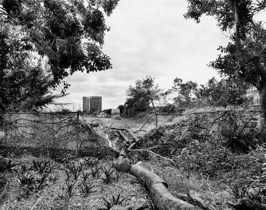 L3Z_Landscape_GreynoldsFence-Edit.jpg