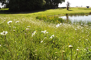 wildflower meadow 2017.JPG