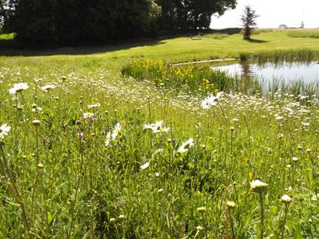 Why we love wildflowers