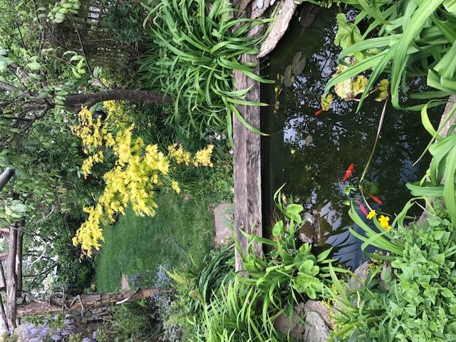 Bespoke Pond