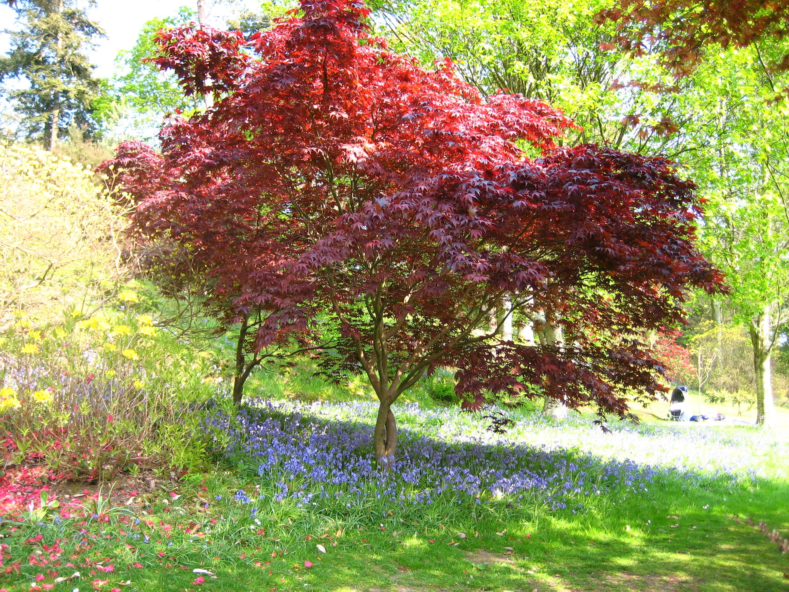 Tree & Flower Planting