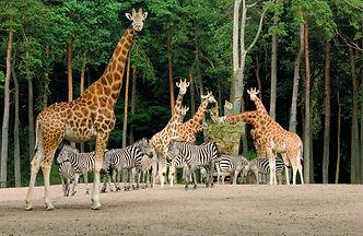 safarivlakte GOC Burgers' Zoo.jpg