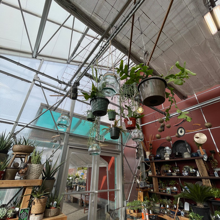 The Top 5 Houseplants to Bring Your Home to Life in 2021