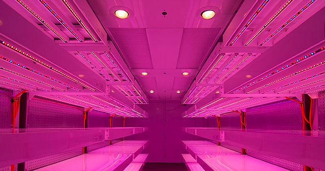 Conviron chambers.jpg