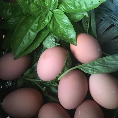 Tiny farm fresh eggs! ————————-#elopeina