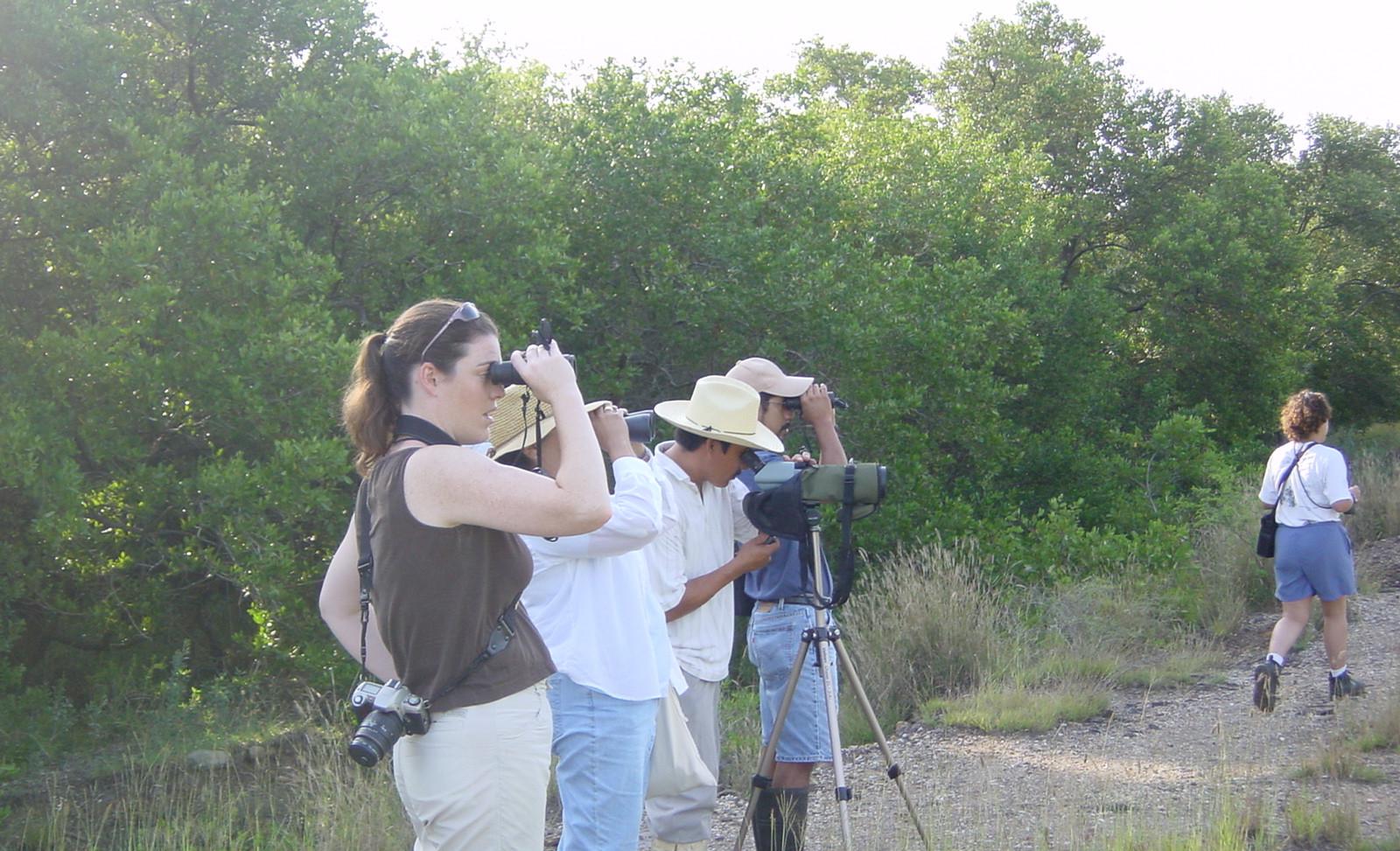 Inicio 2003. Observando aves