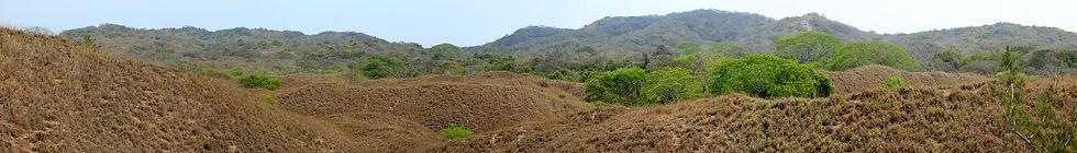 min duna herbacea y duna selva La Mancha