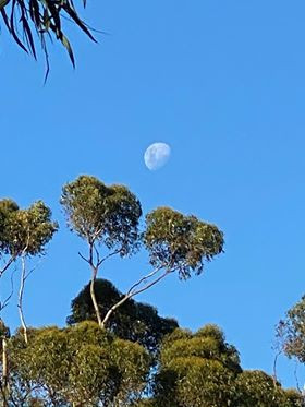Day moon over trees