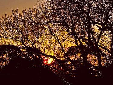 Dusk sky through winter trees