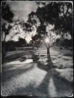 Black & White Sun through Tree