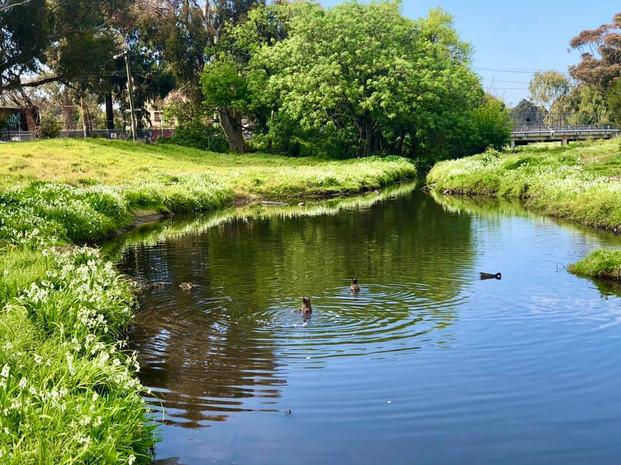 Ducks diving in still waters