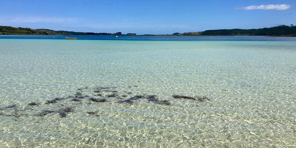 Kauri & Kai Iwi Lakes Day Trip (RESCHEDULED!)