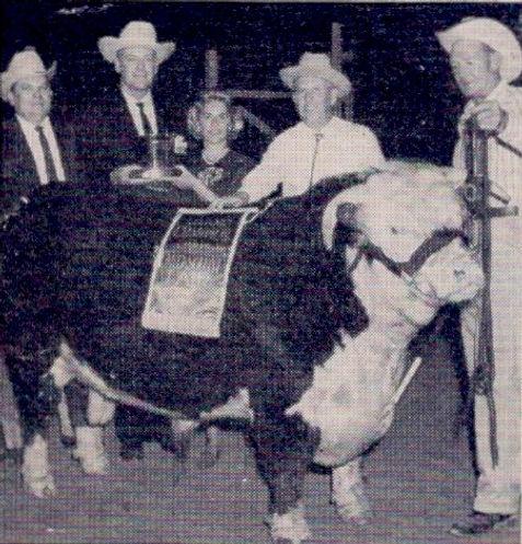 Missouri Herferd Cattle on Edf-Clif