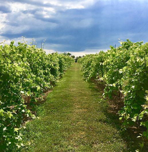 Missouri Vineyards