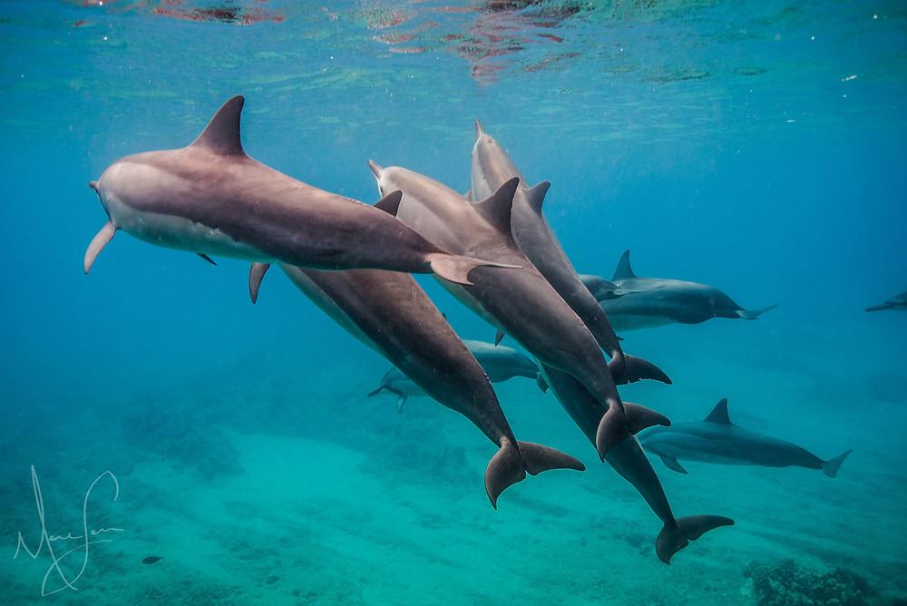 Swimming w/ Dolphins O'ahu, Hawaii